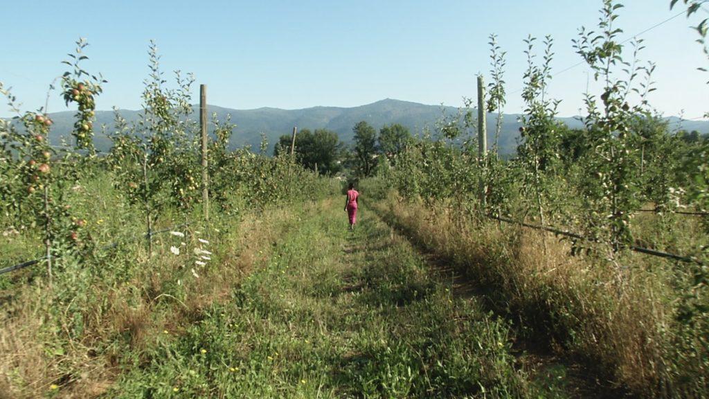 Vergers de Los Masos. Image du film La vie descend de la montagne, réalisé par Olivier Moulaï pour l'association de Sauvegarde du Canal de Bohère