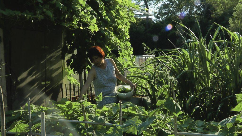 Récolte des légumes au jardin familial du Haut-Vernet. Image du film Le temps du jardin, réalisé et produit par Olivier Moulaï, résidence Occit'Avenir au Lycée Maillol Perpignan
