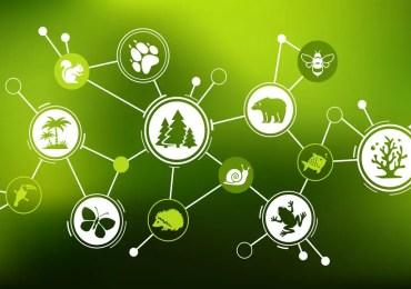 La biodiversité, l'autre défi environnemental