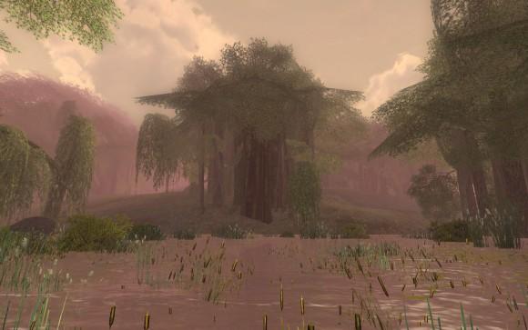 Vieille forêt