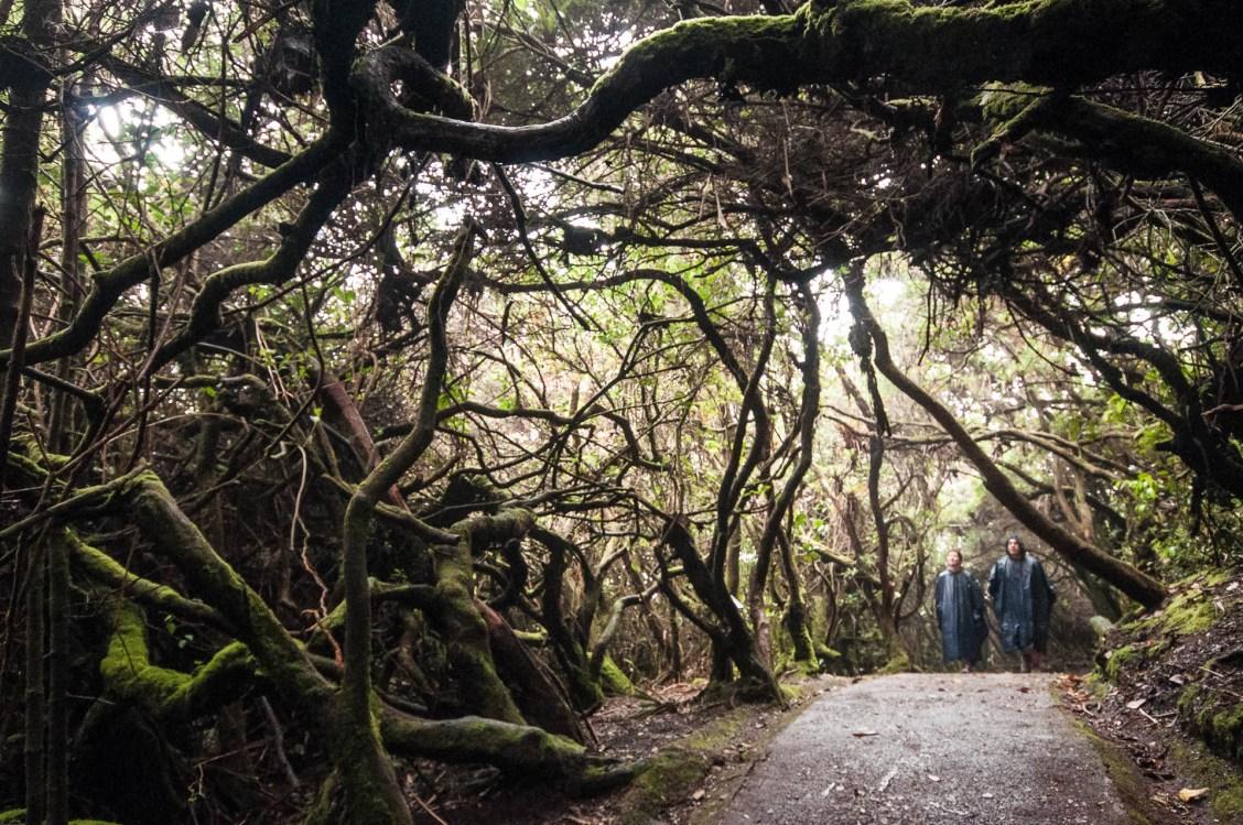chemin volcan Poas