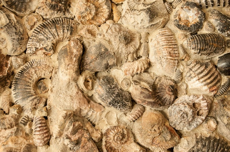 villa-leyva-ensemble-fossile