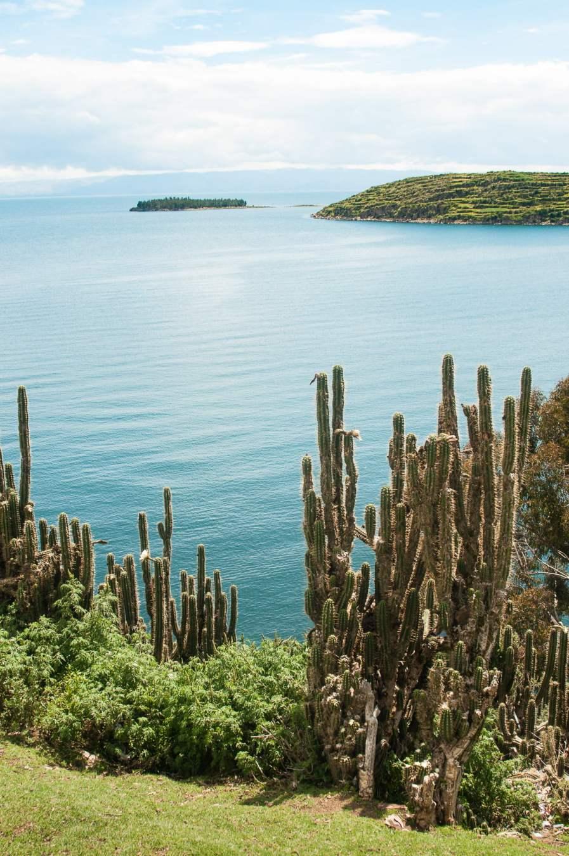 isla-del-sol-plage-cactus