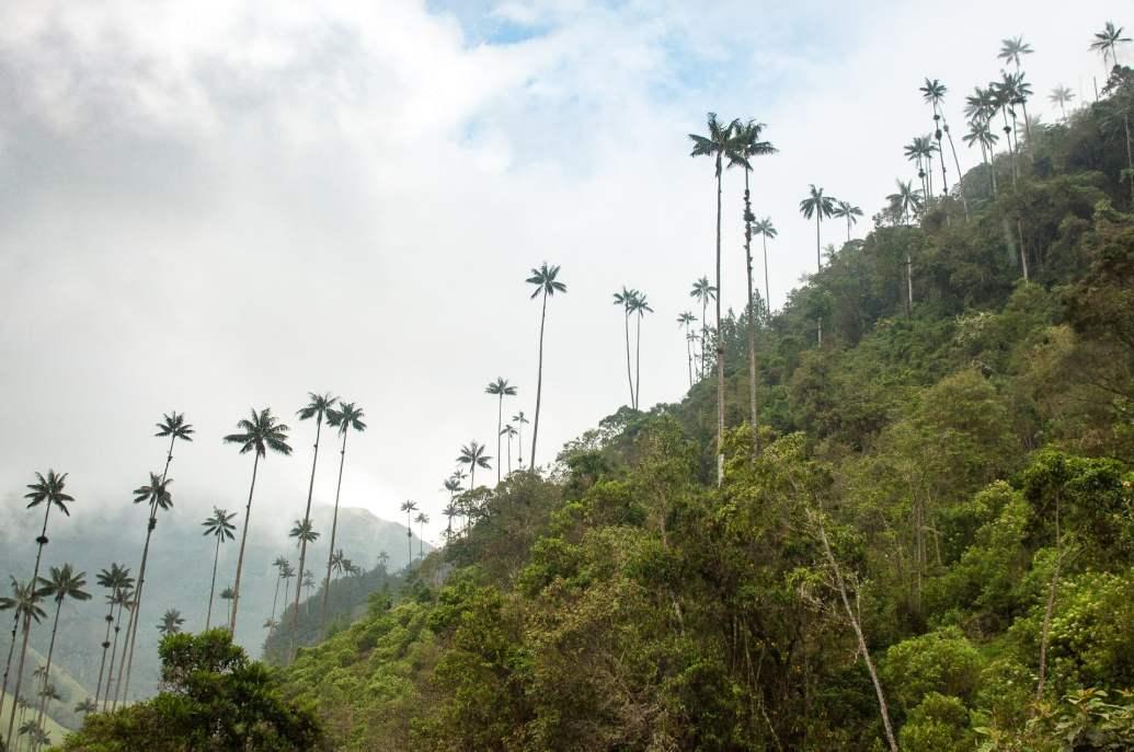 palmiers ciel