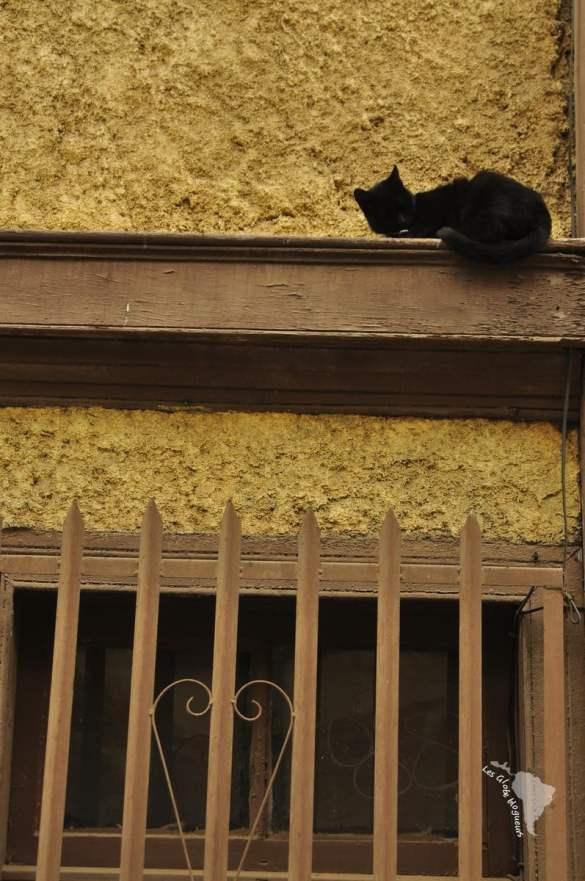 Valparaiso-le chat en hauteur