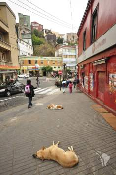 Valparaiso - le chien dort
