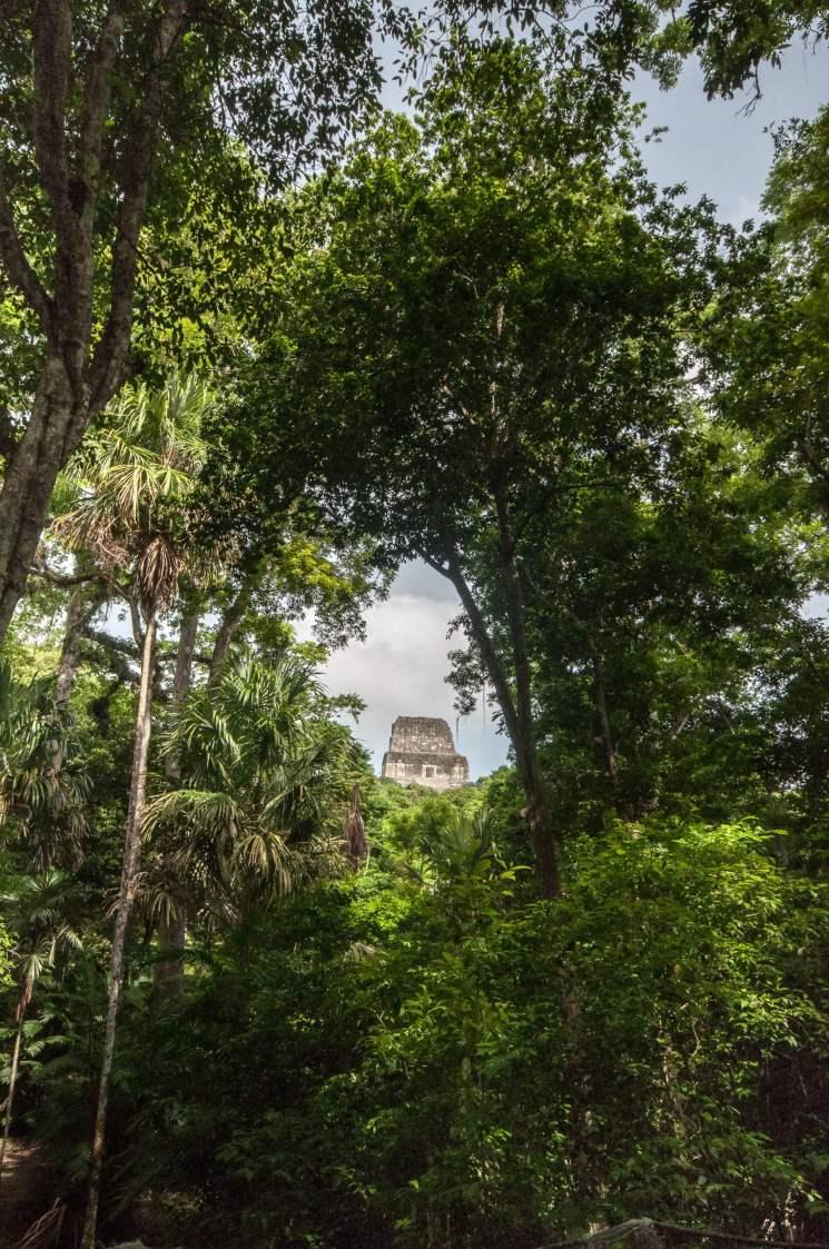 tikal forêt guatemala