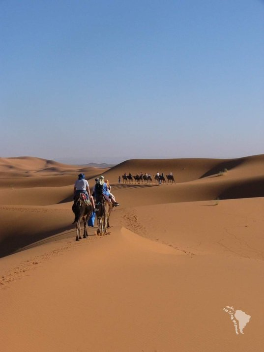 dromadaire désert balade maroc
