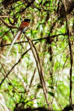 oiseau isalo