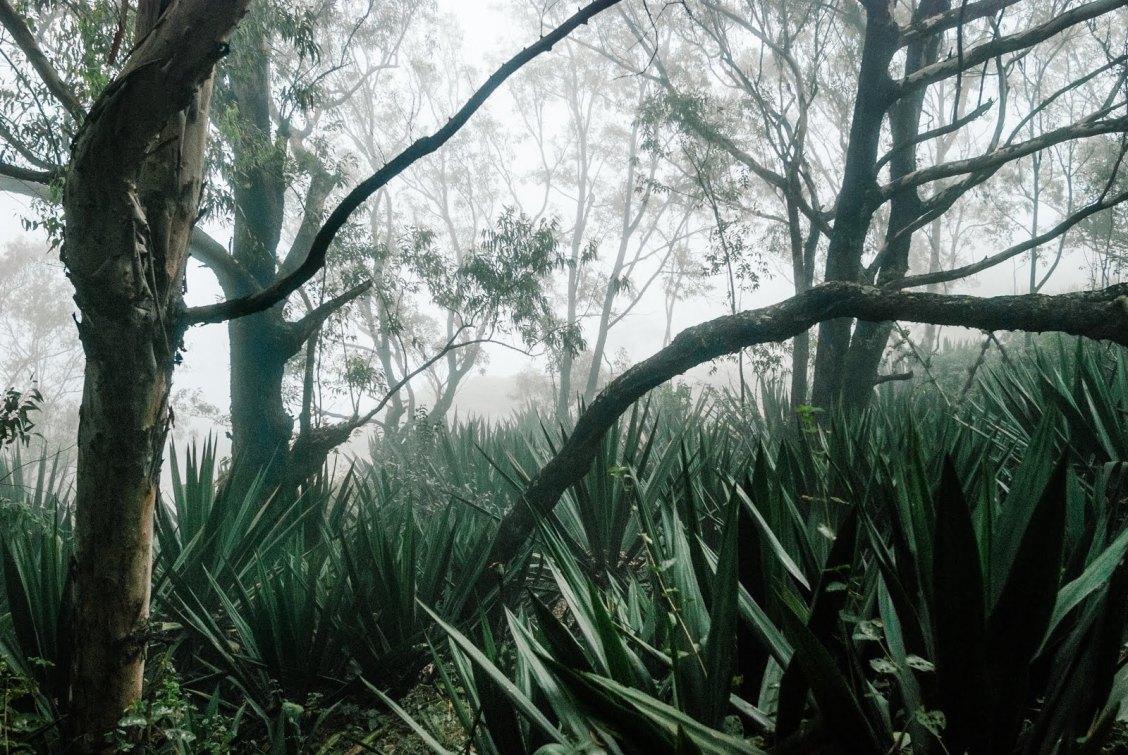 Les plus beaux paysages d'Afrique - parc naturel de Monte Gordo au Cap vert