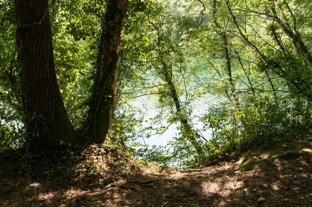 forêt abbaretz