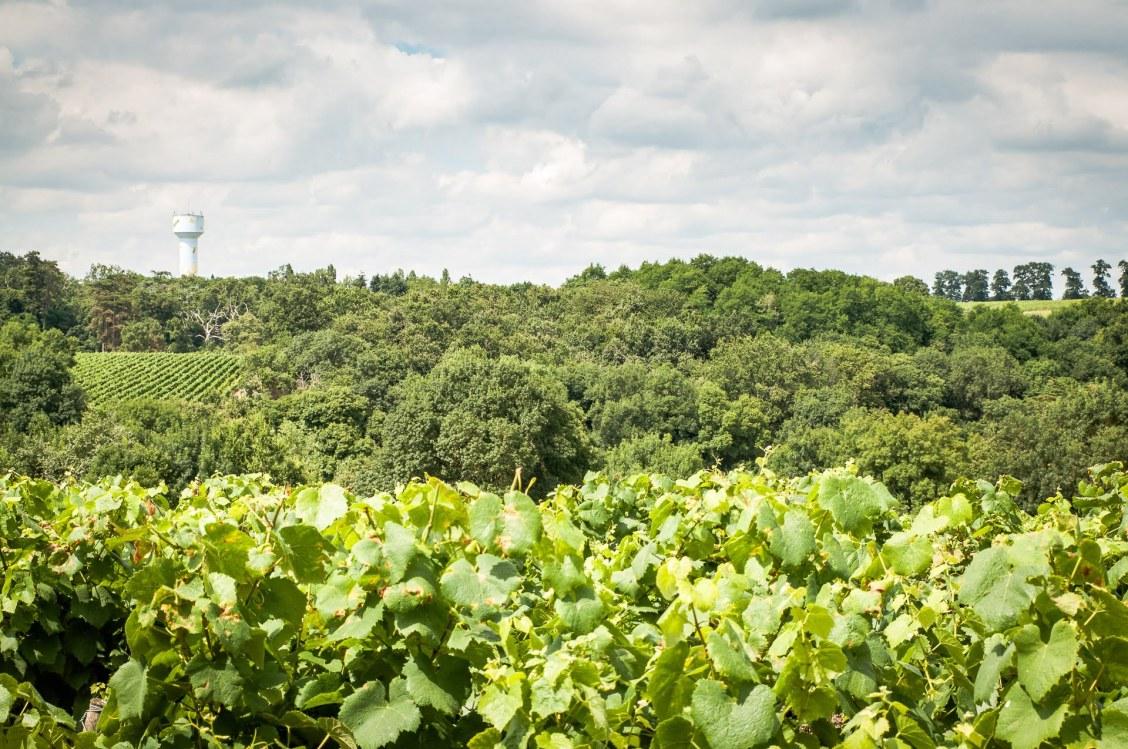 vigne 3 versants