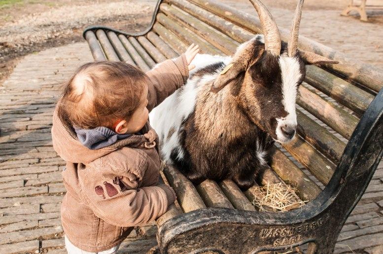 Les chèvres du Jardin des Plantes qui font le bonheur des enfants