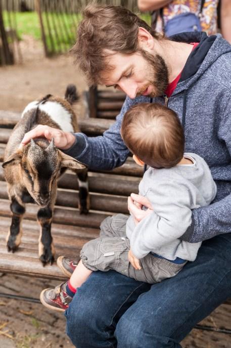 Instant père fils au jardin des Plantes avec les chèvres