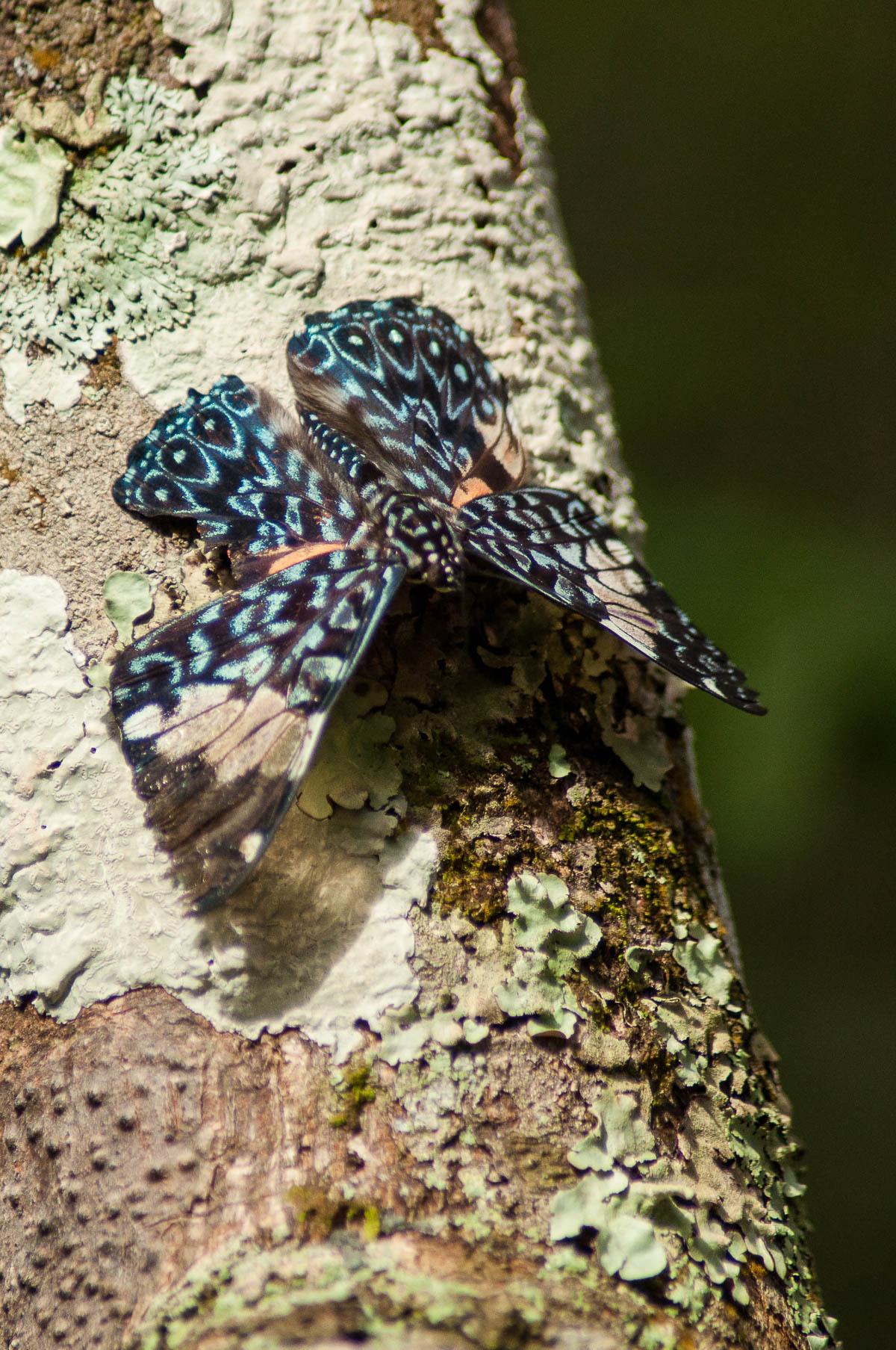 Un des nombreux papillons parc national des chutes d'Iguazu