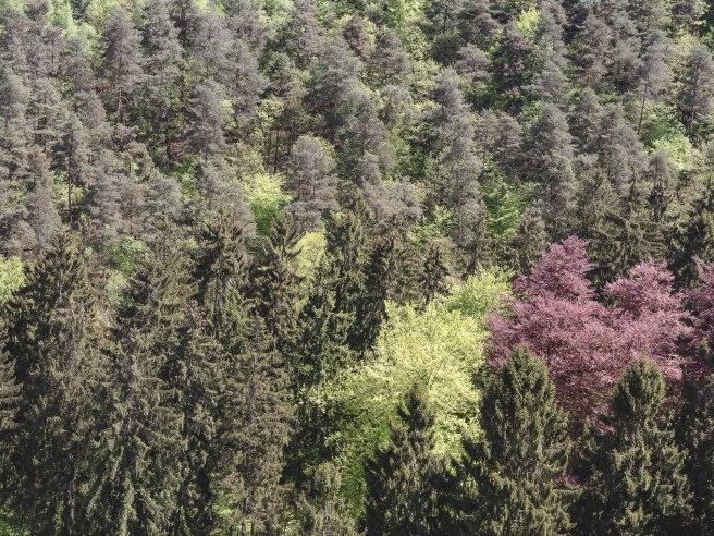 arbres ninglinspo