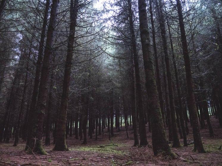 forêt ardennaise