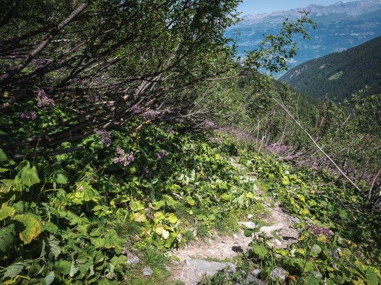 rechy végétation typique