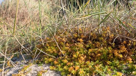 végétation piriac loire atlantique