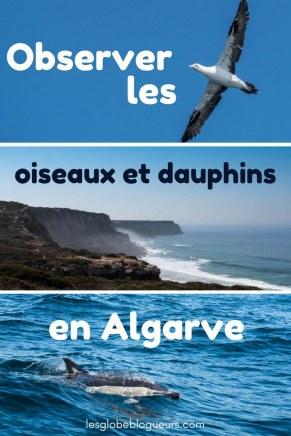 où et comment observer des oiseaux et des dauphins près de Sagres en Algarve au Portugal.