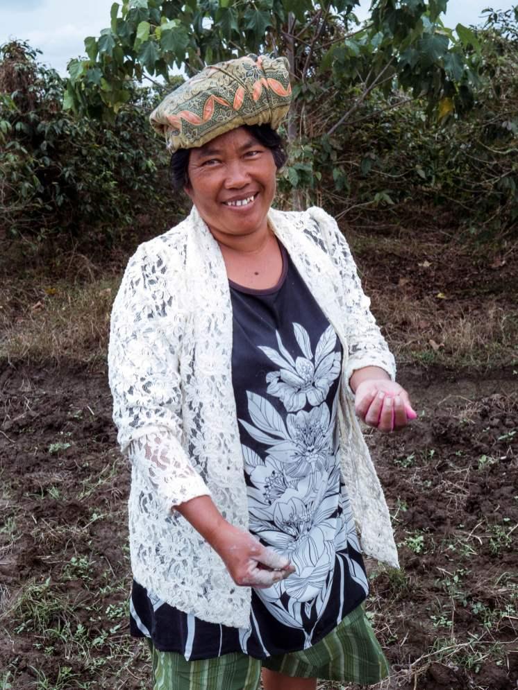 Agriculture au lac Toba à Sumatra en Indonésie