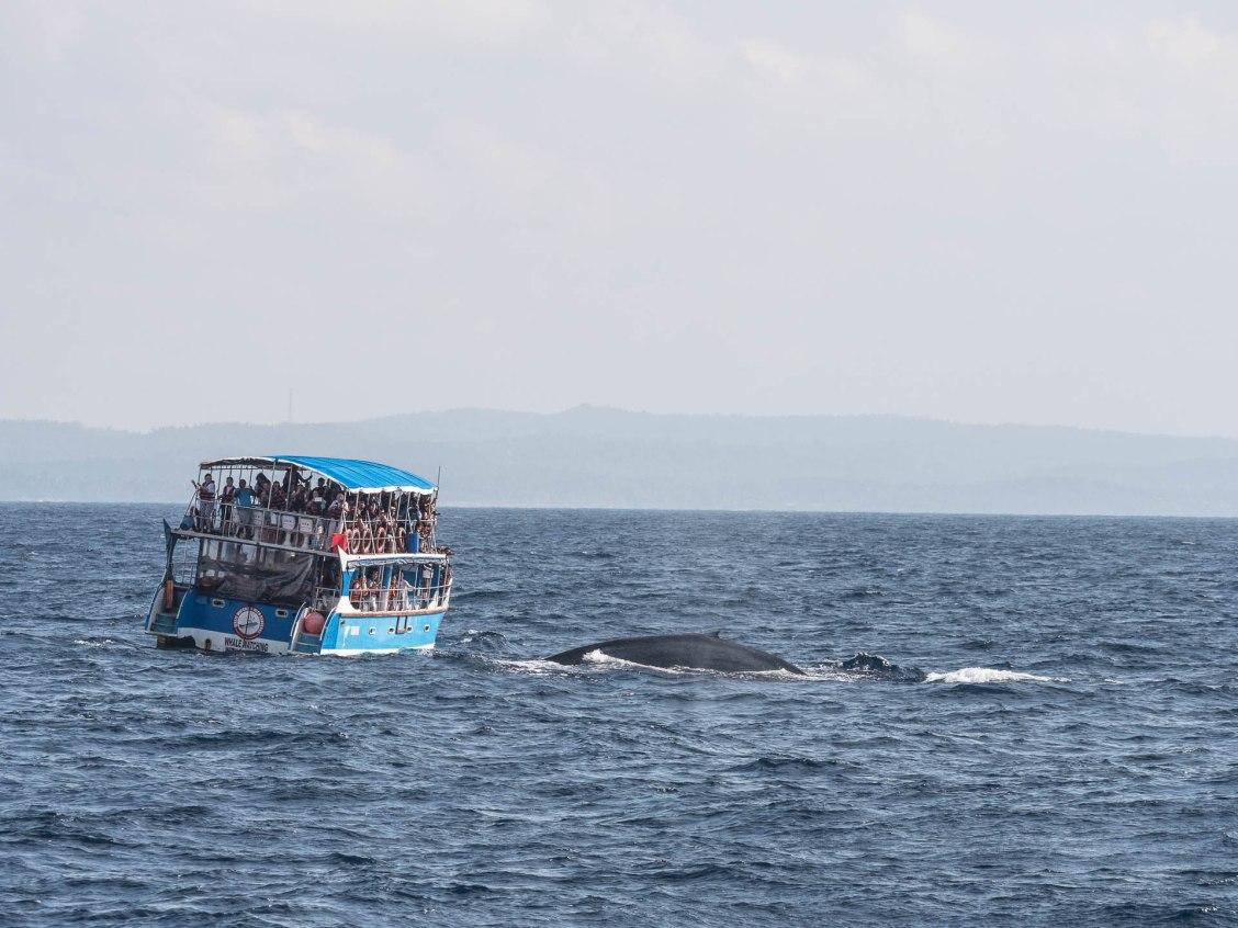 mirissa bateau baleine