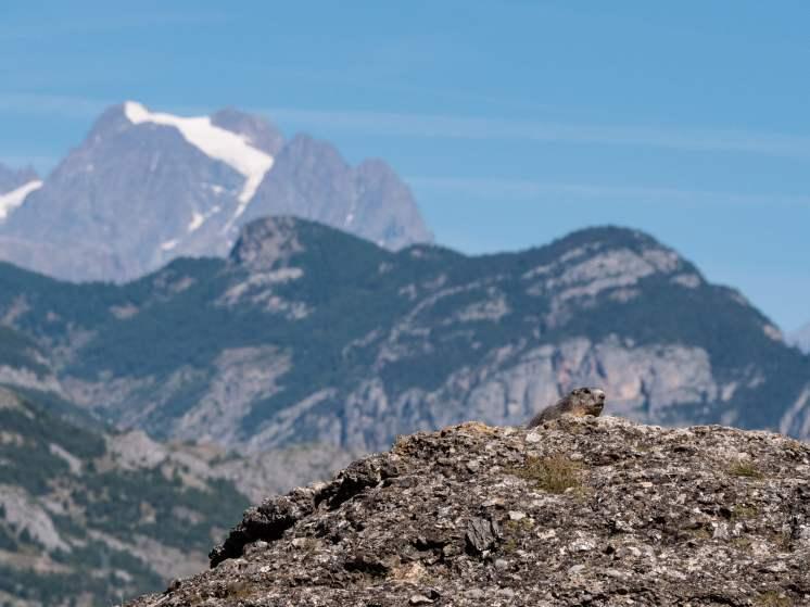 Visiter les Hautes Alpes - Guillestrois