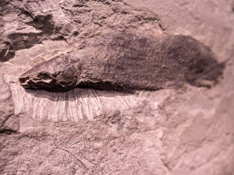 Fossile au Parc national de Miguasha