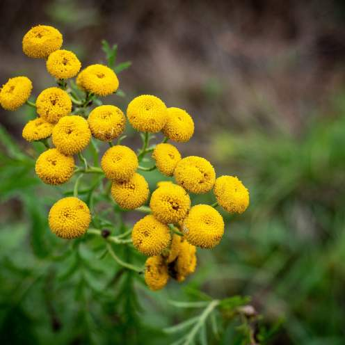 flore d'automne en wallonie
