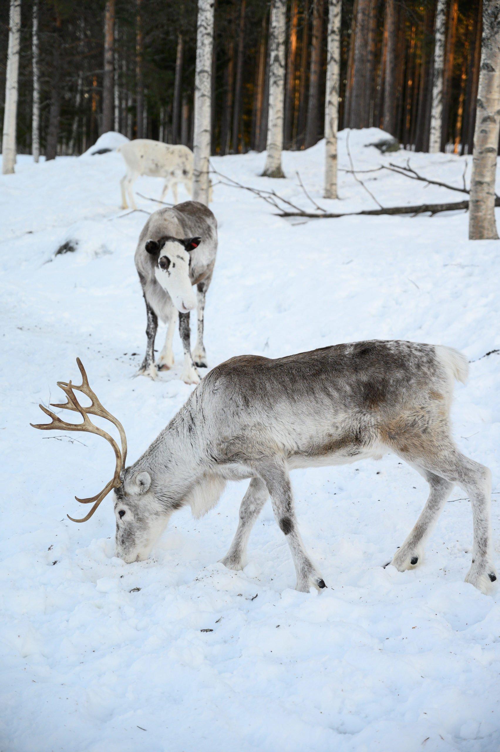 Laponie 2021 scaled