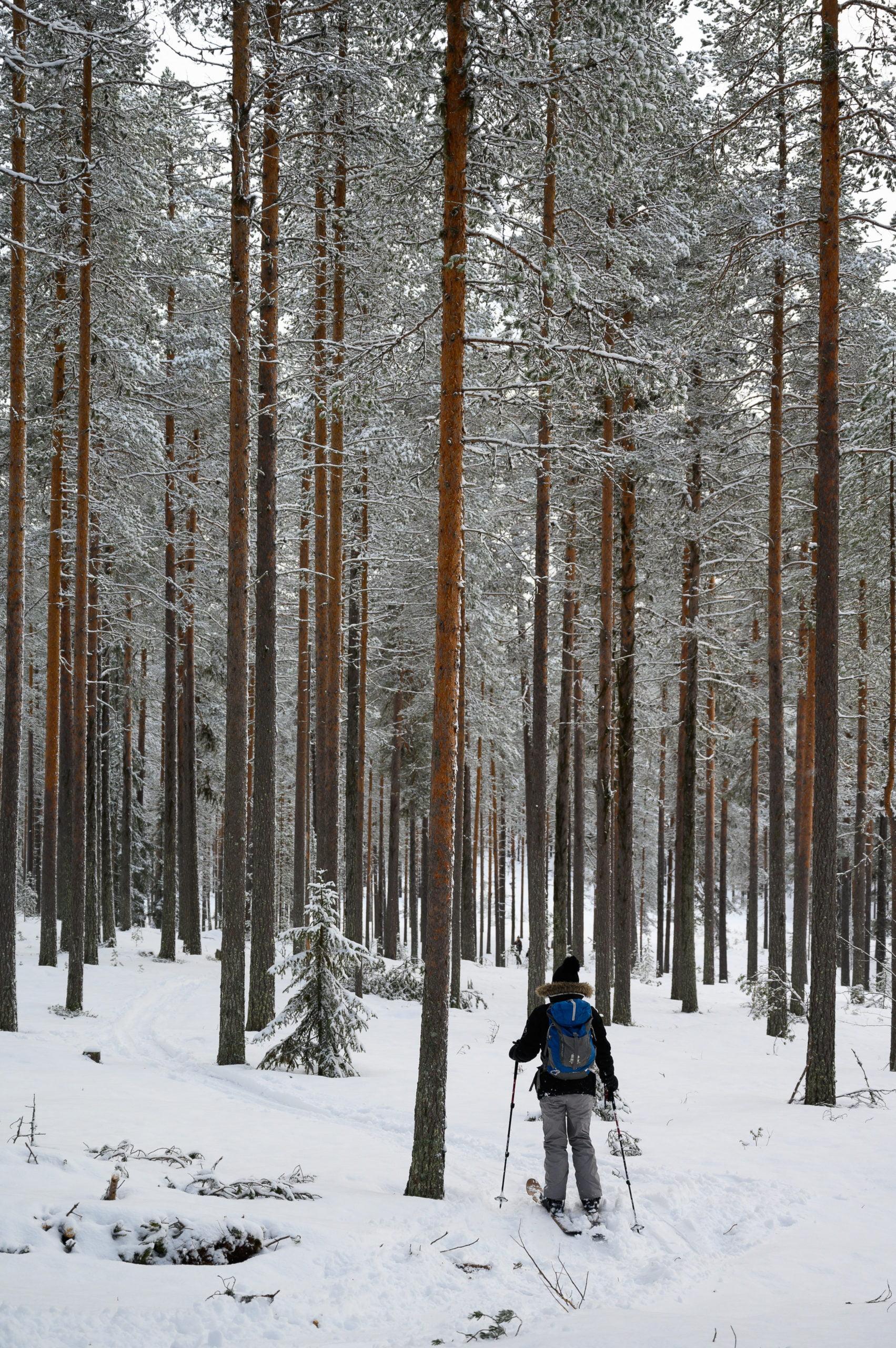 Laponie 2362 scaled