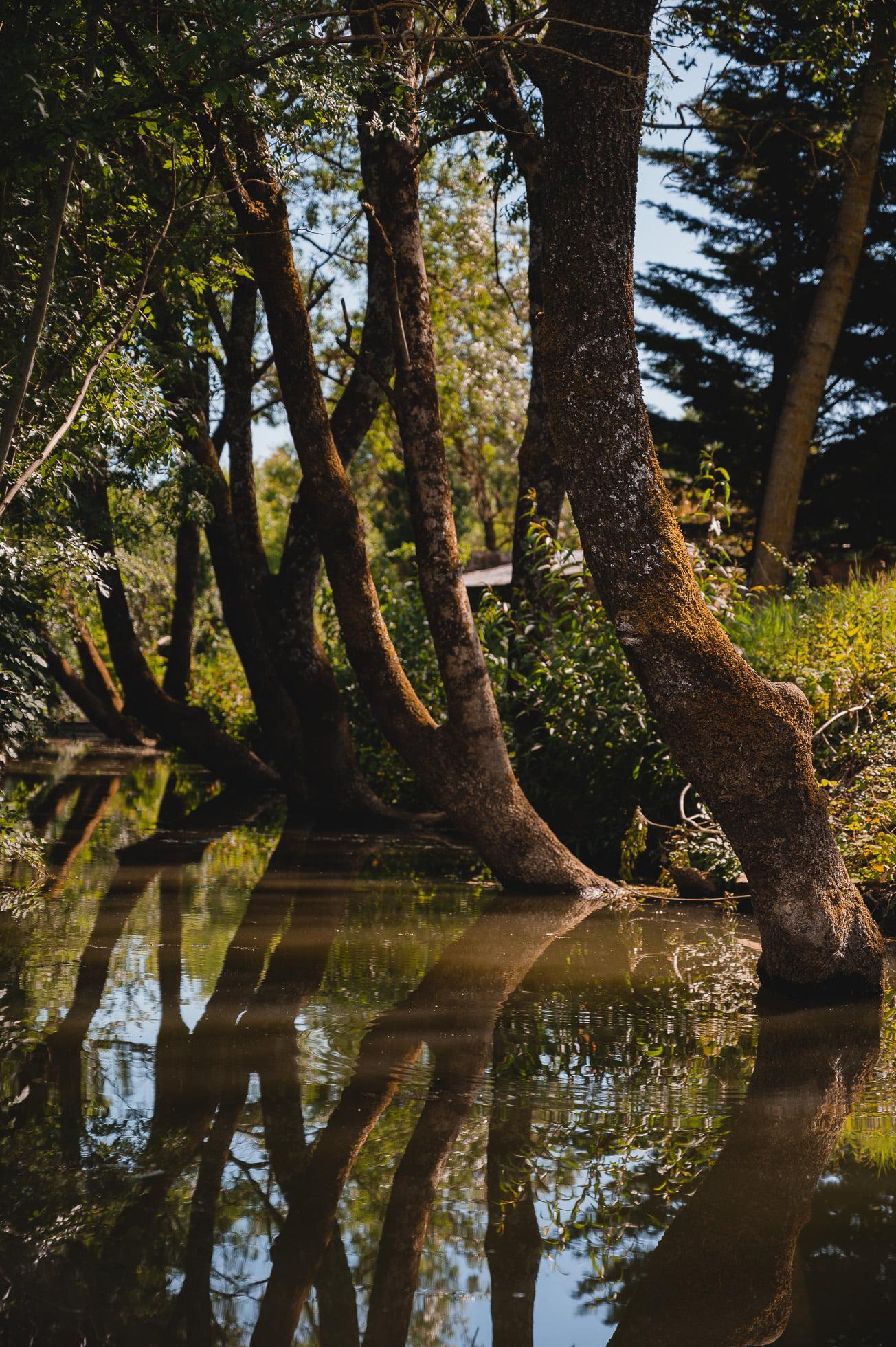 marais poitevin 8251 - Les globe blogueurs - blog voyage nature