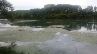 Les bords du Rhône
