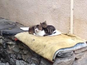 Le village des chats!