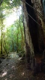 Le parcours est en forêt: super agréable!