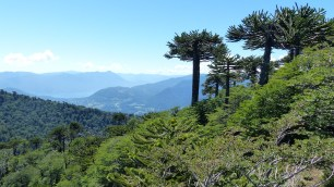 Au Nord, vue sur le lac Caburgua, et au centre, tout au loin, le volcan Llaima