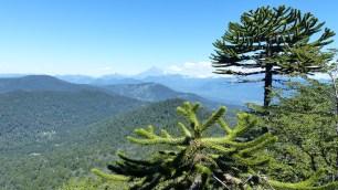 Les araucarias ont colonisé le sommet rocheux où nous nous trouvons
