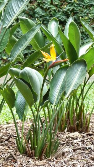 Une multitude de plantes ornent les allées