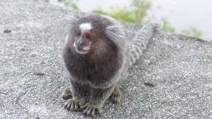 Ces petits singes sont trop mignons!