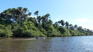 La végétation comporte de nombreuses variétés de palmiers