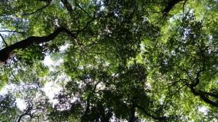 Sous les arbres du jardin botanique