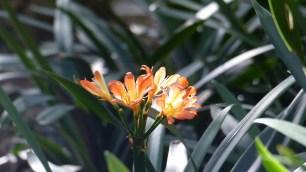 Une autre fleur orange