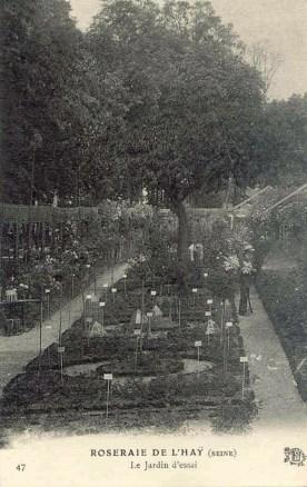 031© 47 ROSERAIE DE L'HAY - Le Jardin d'essai_wp
