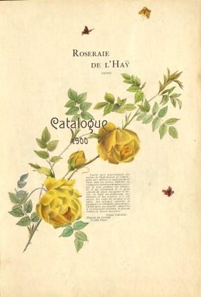 1900 Catalogue GE (47J_003_004)_wp