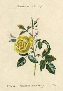 1900 Catalogue GE (47J_003_084a)_wp
