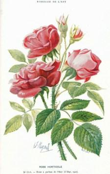 1902 RdlH - Catalogue p91A_wp