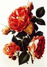 1994 DdVdM - Mémoires de Roses p33 - Les Rosati_wp