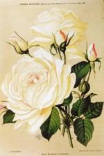 Rosomane Gravereaux (1912 SNHF)_wp