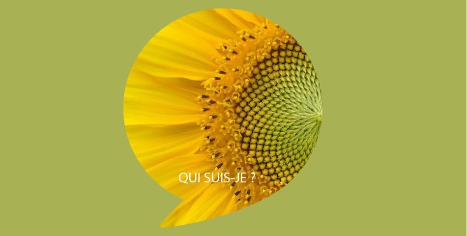 Huile tournesol oleique biologique dans notre dans notre ligne de soins slow cometique, bio et vegan