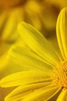 Choisir son huile démaquillante bio
